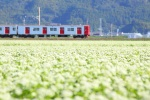 2013_浜窪そばの花