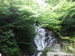 白糸の滝とカエデ