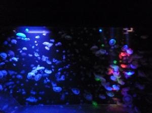 クラゲ水槽