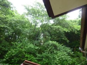 住宅に木が生い茂っている