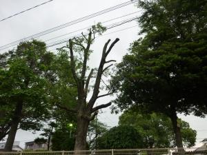 選定された樹木(6月7日撮影)