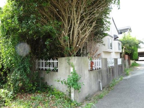 市道を覆っている庭木が切られた(平成25年8月13日撮影)
