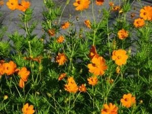 慰霊塔の周りのお花