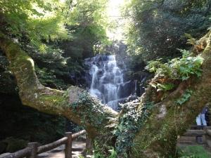 萬龍楓(ばんりゅうかえで)から見た白糸の滝