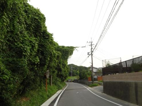 県有地が雑木や雑草で覆われれいる(平成25年7月30日撮影)