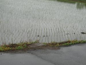 撤去されたカーブミラー(6月27日撮影)
