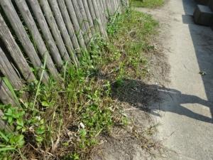 柵の下の側溝が土砂で埋まっている(7月29日撮影)