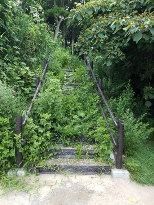 階段を両側から雑草が覆う