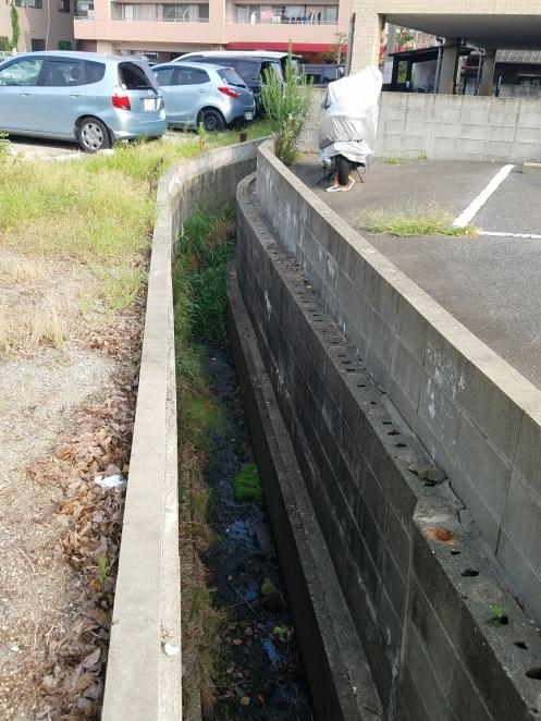 刈り取られてスッキリなった水路
