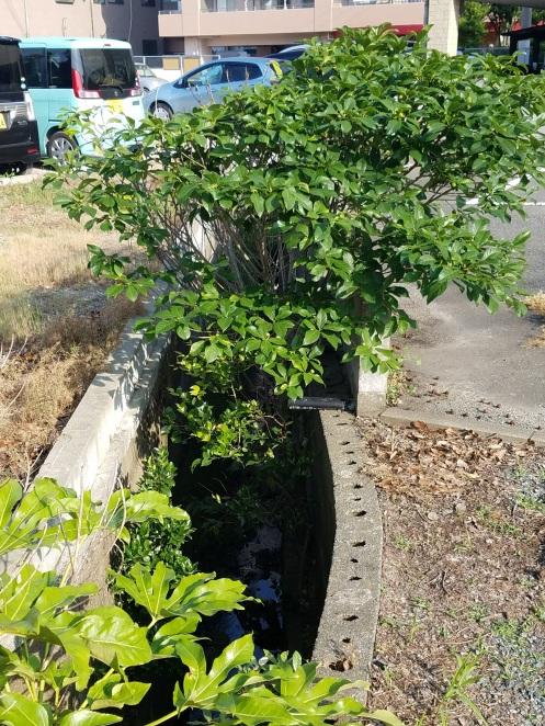 水路に雑木や雑草が生い茂っている