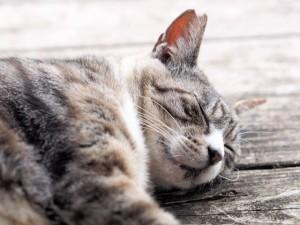 さくら耳の猫ちゃん