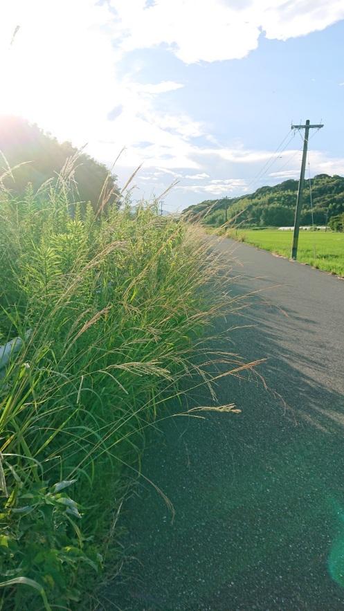 市道に雑草が生い茂る